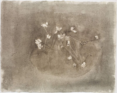 Charlotte Verity, 'Cyclamen Cycle', 2014