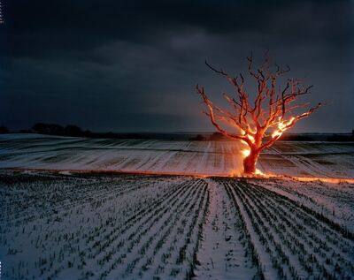 Henrik Saxgren, 'Burning Tree', 2010