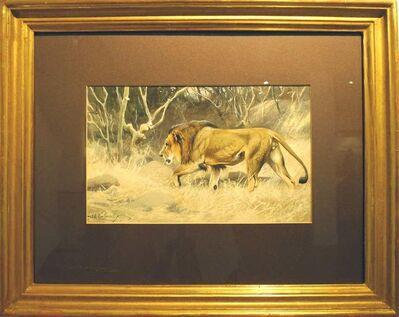 Wilhelm Kuhnert, 'Lion on the move', ca. 1920