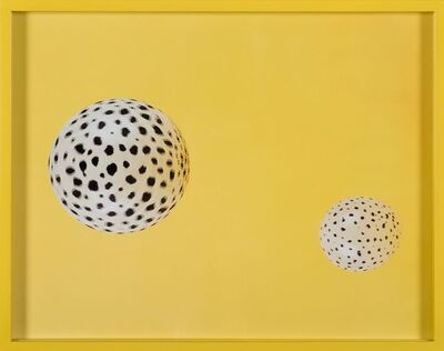Elad Lassry, 'Untitled (Cheetah)', 2008