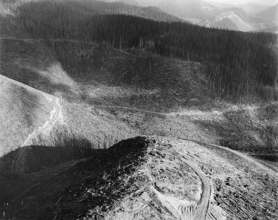 Frank Gohlke, 'Aerial view: Edge of eruption impact zone showing blown-down, standing dead and living tress. Salvage in progress. Approx. 14 miles NW of Mt. St. Helens, Wash., 1981', 1981
