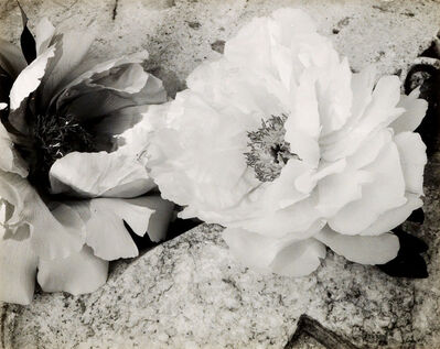 Minor White, 'Peonies', 1957