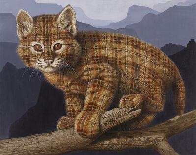 Sean Landers, 'Bobcat Kitten (Grand Canyon, AZ)', 2015