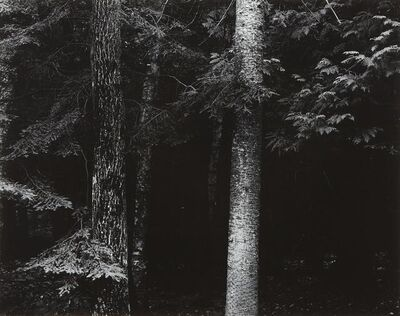Harry Callahan, 'Wisconsin', ca. 1954