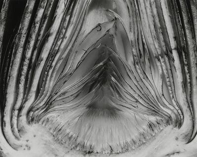 Edward Weston, 'Artichoke, Halved, 1930', 1930