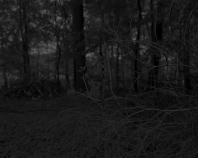 Dawoud Bey, 'Night Coming Tenderly, Black: Untitled #7 (Branches and Woods)', 2017