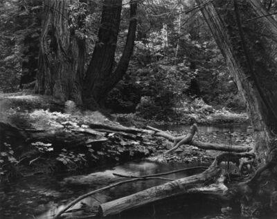 Wynn Bullock, 'Woman in the Forest (Nude on Log)', 1954