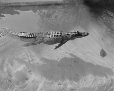 Heli Rekula, 'Gator', 2012