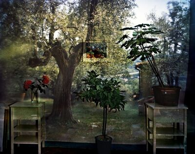 Abelardo Morell, 'Camera Obscura: Garden with Olive Tree Inside Room with Plants, Italy', 2009