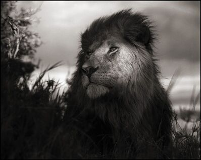 Nick Brandt, 'Lion in Shaft of Light, Maasai Mara, 2012', 2012