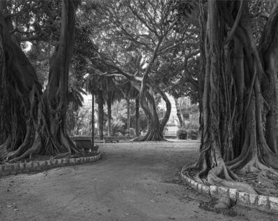 John Riddy, 'Palermo (Giardini Inglese - Ficus)', 2013