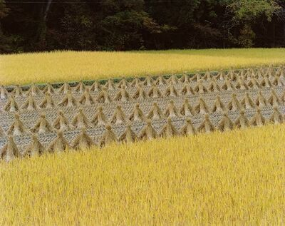 Toshio Shibata, 'Untitled 7'
