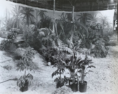 Robert Cumming, 'Marinduque Island Jungle - Stage #36', 1977