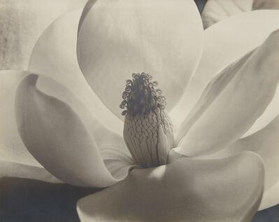 Imogen Cunningham, 'Magnolia Blossom ('Formen Einer Blume')', 1925