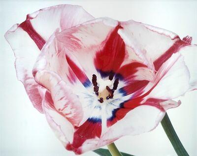 "Nobuyoshi Araki, 'Untitled, from the series ""Flowers""', 1996"