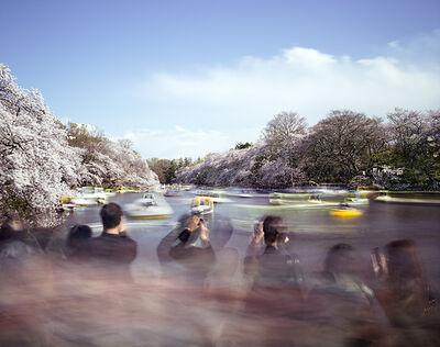 Matthew Pillsbury, 'Hanami #14, Inokashira Park, Saturday April 5th(TV14614)', 2014