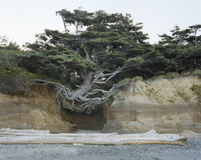 "Mitch Epstein, '""Tree of Life"" Tree Root Cave, Kalaloch, Olympic National Park, Washington 2017', 2017"