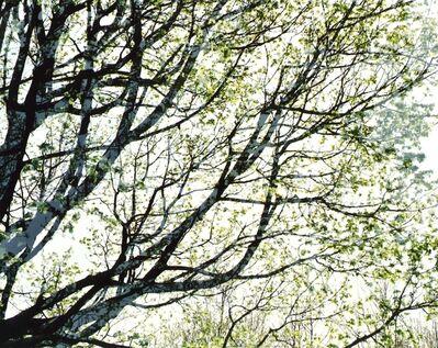 Leah Oates, 'Bronx, New York, Pelham 4', 2008-09