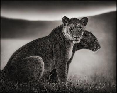 Nick Brandt, 'Sitting Lionesses, Serengeti', 2002