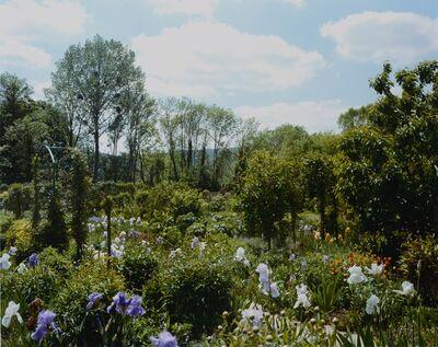 Stephen Shore, 'Irises in bloom', 2002