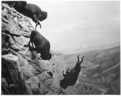 David Wojnarowicz, 'Untitled (Buffalos)', 1988-89/1994