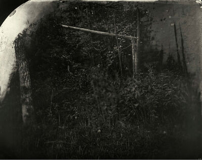 Sally Mann, 'Battlefields, Wilderness (Solarized Trees)', 2002
