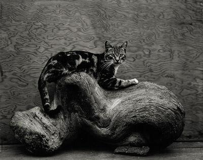 Edward Weston, 'Johnny', 1944