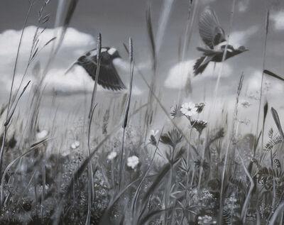 Gabriel Tempesta, 'Grassland Pulse', 2018