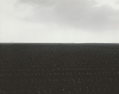 Rhondal McKinney, 'Untitled #3309', 2005