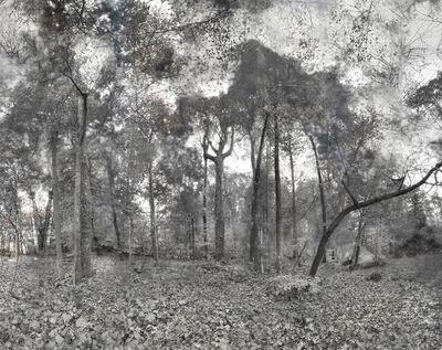 Tama Hochbaum, 'Trident Tree', 2018