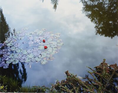 Stephen Shore, 'Waterlilies', 2002