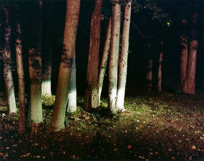 Maria Passarotti, 'Woods', 2005