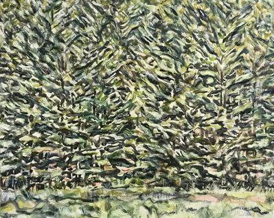 Edward Bear Miller, 'White Pine Medley', 2019