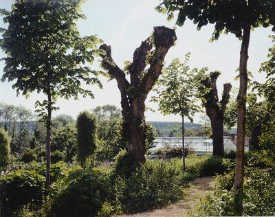 Stephen Shore, 'Pollarded Tree', 2002