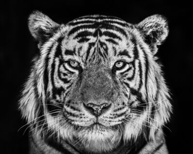 David Yarrow, 'Rajasthan', 2019