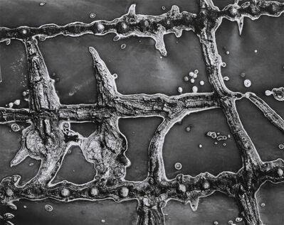 Brett Weston, 'Cactus Abrasion', 1966