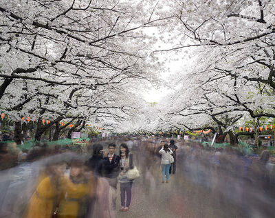 Matthew Pillsbury, 'Hanami #1, Ueno Park, Wednesday April 2nd (TV14600)', 2014