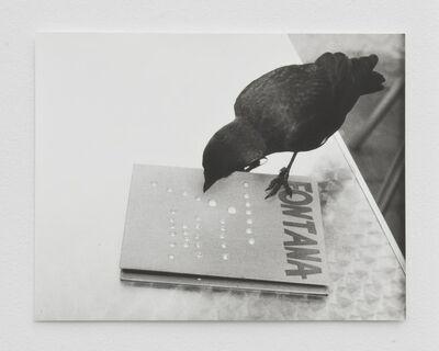 Jochen Lempert, 'Jackdaw (Fontana) I', 2014
