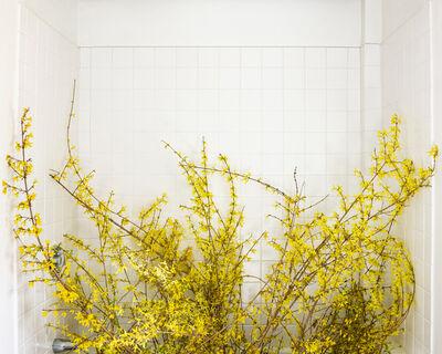 Cig Harvey, 'Forsythia, (Forcing Bloom in the Bathtub)', 2020