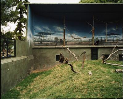 Richard Billingham, 'Mandrils', 2005