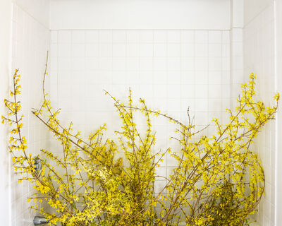 Cig Harvey, 'Forsythia (Blooming)', 2020