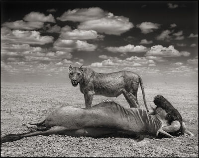 Nick Brandt, 'Lion and Wildebeest', 2012