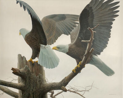 Robert Bateman, 'Landings - Bald Eagle', 2017