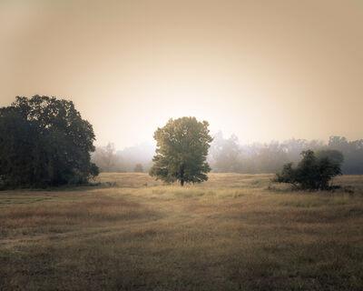 Kate Breakey, 'Tree in the Mist, Plum Creek, Texas'