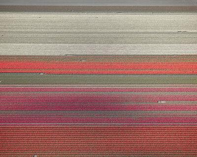 David Burdeny, 'Tulips 10, Noordoostpolder, Netherlands, 2016', 2016