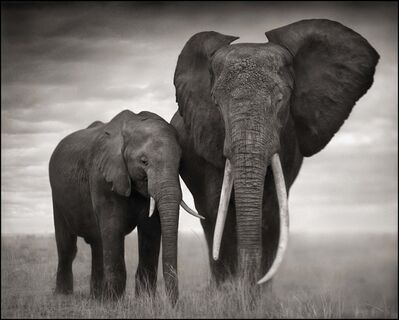 Nick Brandt, 'Elephant with Flaring Ears, Amboseli', 2007