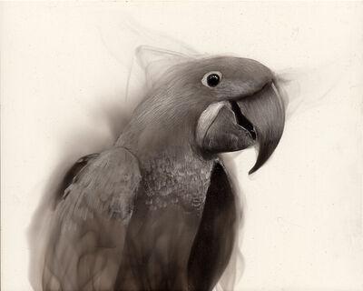 Steven Spazuk, 'Macaw', 2020