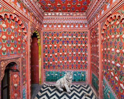 Karen Knorr, 'The Locust Eater, Udaipur City Palace', 2020