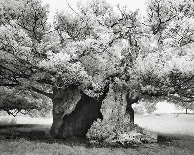 Beth Moon, 'Queen Elizabeth's Oak', 2004