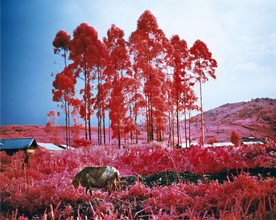 Richard Mosse, 'Beginning To See The Light', 2015
